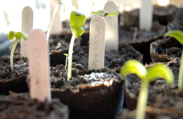 how_to_grow_food