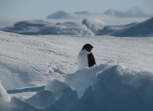 The Antarctic Wilderness: Can We Save it from Destruction?