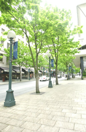 Street-Trees_on-5th-Avers